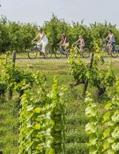 vignes-vélo-chateaux.jpg
